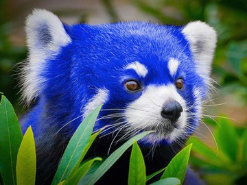 Firefox Quantum станет крупнейшим обновлением браузера от Mozilla